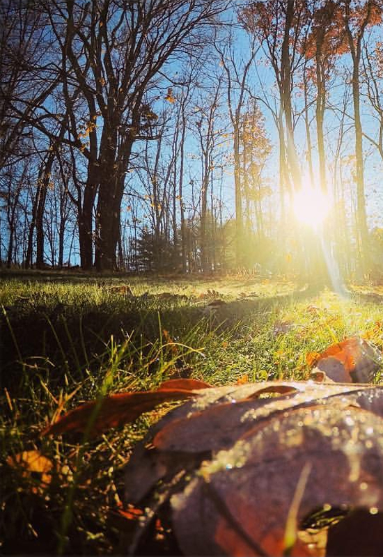DAVE KENNEDY/Sun-Gazette Correspondent Sun shines through trees nears Hughesville last week, illuminating the autumn leaves. This week, hunters who hit Pennsylvania's wooded areas in search of white-tailed deer will do so amid dwindling sunshine and, by midweek, steady rain, meteorologists say.