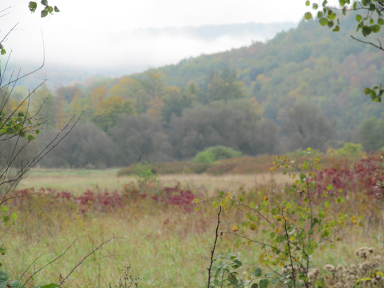 PHOTO PROVIDED Shown above is a view of the wetlands that are part of a newly purchased lot that will serve as an access area for the northern part of the Pine Creek Rail Trail in Tioga County.