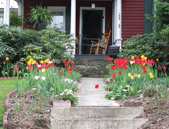 BILL BOWER/Sun-Gazette Correspondent The tulips at above left were saved because Mary Alice Bower, of Troy, covered them with chicken wire to protect them from hungry deer.