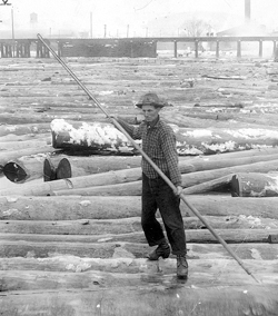 SUN-GAZETTE FILE PHOTO A boom rat works the logs in the Susquehanna Boom more than a century ago when lumber still was king here. Jay Decker, of Cogan Station, believes the photo is of his grandfather, Henry Amon Decker.