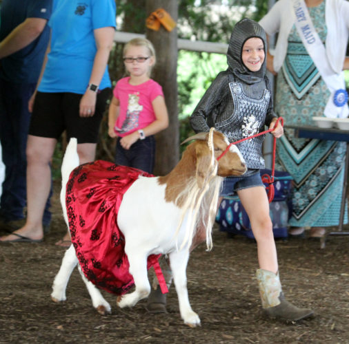 "Sidney Ertel, 10, of South Williamsport walks ""Pipsqueak"" the goat dressed as a princess around the Livestock Arena during the animal dress-up contest during 4-H Fun Night at the Lycoming County Fair in Hughesville on Thursday July 20, 2017.  KAREN VIBERT-KENNEDY/Sun-Gazette"