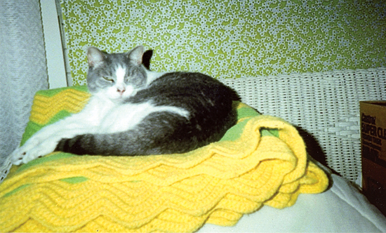 PHOTO PROVIDED Shown is Sparkie, cat of Shriley Lorah, of Watsontown.