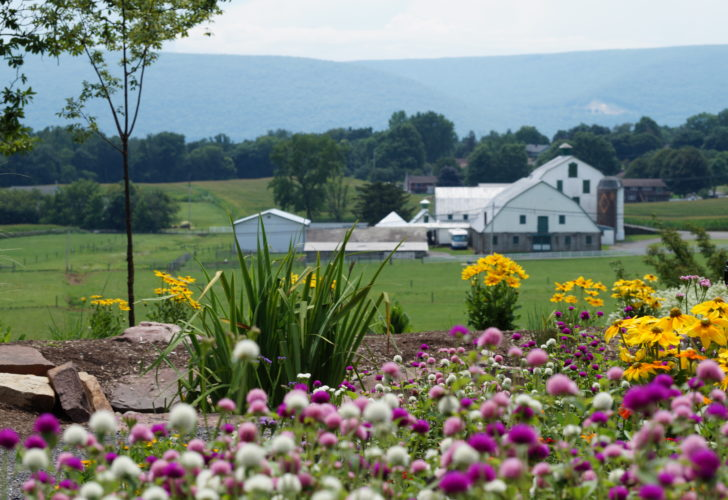 PHOTO COURTESY OF DEB DAMASKA This Saturday, the Lycoming County Master Gardeners will be on hand to answer plant-related questions and offer suggestions for buying new plants at their annual GardenFest. All of the demonstration gardens will be open, and vendors will be on site. The festival will be held rain or shine.
