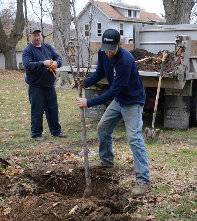 KATELYN HIBBARD/Sun-Gazette Chad Eckert, city arborist, right, and Dave Oliver, of the city's Streets and Parks Department, plant a flowering cherry tree in Brandon Park. The cherry was one of 12 varying trees planted in the park Tuesday, helping to replace those lost after a storm in May. Another six will be planted today.