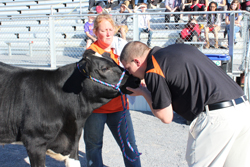 CARA MORNINGSTAR/Sun-Gazette Bill the cow, taken care of by Nichole Bechdel, eighth grade language arts teacher, center, puckers up as Justin Armbruster, Jersey Shore Area Middle School assistant principal, leans in for a kiss during the Kiss the Cow event at the Jersey Shore Area High School football field recently.