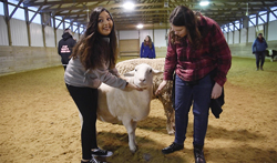 In this Dec. 12, 2017 photo, Evelyn Sanchez and Maggie Drost, students in McHenry School  District 156, interact with a sheep at Main Stay Therapeutic Farm in Richmond, Ill.They are part of an experimental program teaching students to learn positive coping skills while working with farm animals.(John Starks/Daily Herald, via AP)