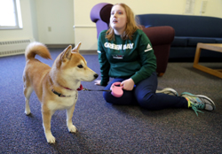 This undated photo shows PJ, a Shiba Inu, with UW-Green Bay student Mackenzie Schopf in Green Bay, Wis. PJ serves as an emotional support animal for Schopf, who lives in the dorms on campus. (Sarah Kloepping/Herald-Times Reporter via AP)
