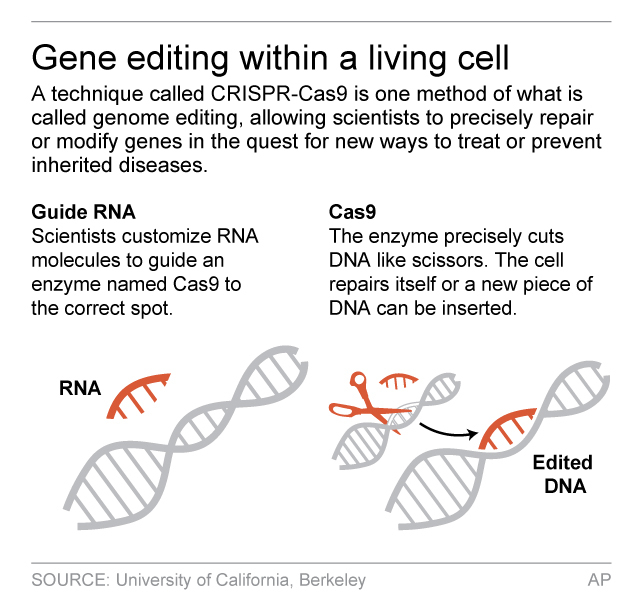 Graphic explains the CRISPR-Cas9 method of gene editing; 2c x 3 inches; 96.3 mm x 76 mm;
