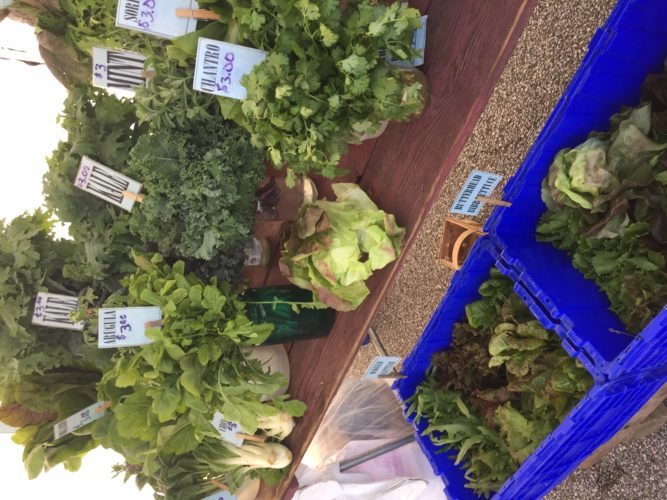 Greens and herbs grown by Mick Luber on Bluebird Farm in Cadiz will be for sale this Saturday at the Wheeling Farmers' Market on National Road in the St. Michael Catholic Church parking lot. The market is from 8 a.m. to noon Saturdays.