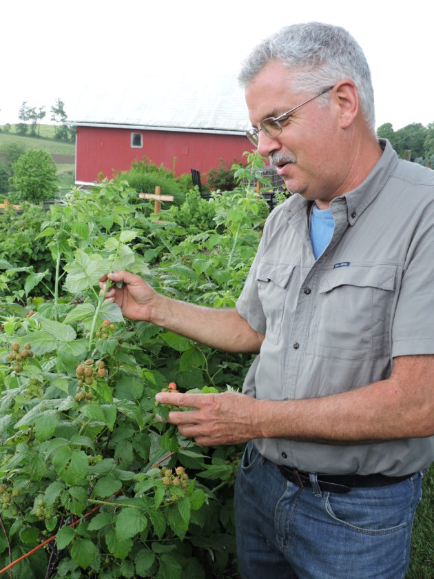 Photo by Heather Ziegler  Eric Freeland examines the fruits of his labor in one of the berry gardens at his Windsor Heights farm.