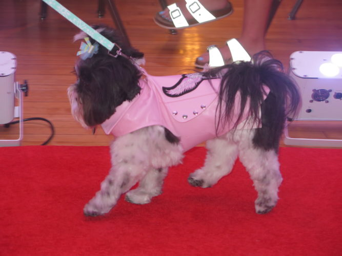 Bella was a pretty pooch in pink at the Women's Expo fashion show on Wednesday at the White Palace, Wheeling Park. Her outfit was from The Snotty Pooch in St. Clairsville.