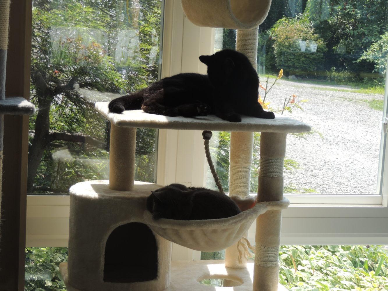 Adopting A House Cat