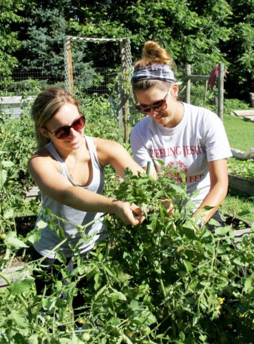 Photos Provided Halli Richards and Kailee Latocha tie up tomato plants in the garden at Wheeling Jesuit University.