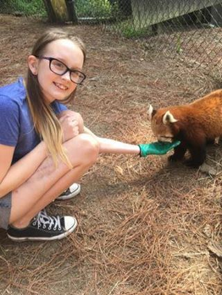 Emma, 13, who has brain cancer, feeds one of two red pandas at the Oglebay Good Zoo as part of a zookeeper experience she was granted through the Cancer Kiss My Cooley organization.  Photos Provided