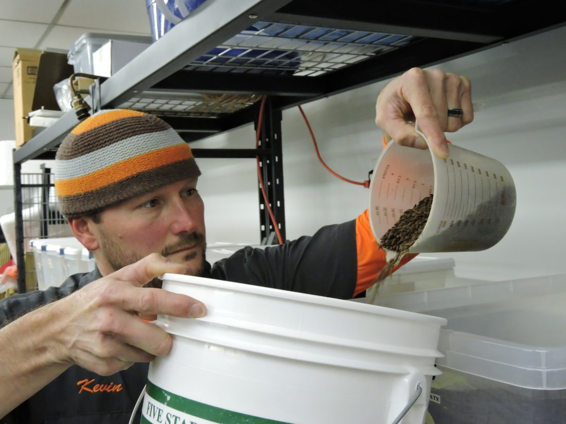 Photo by Casey Junkins Above, Kevin Ayers, co-owner of the Brew Keepers craft beer operation, scoops some chocolate barley for one of his beers.