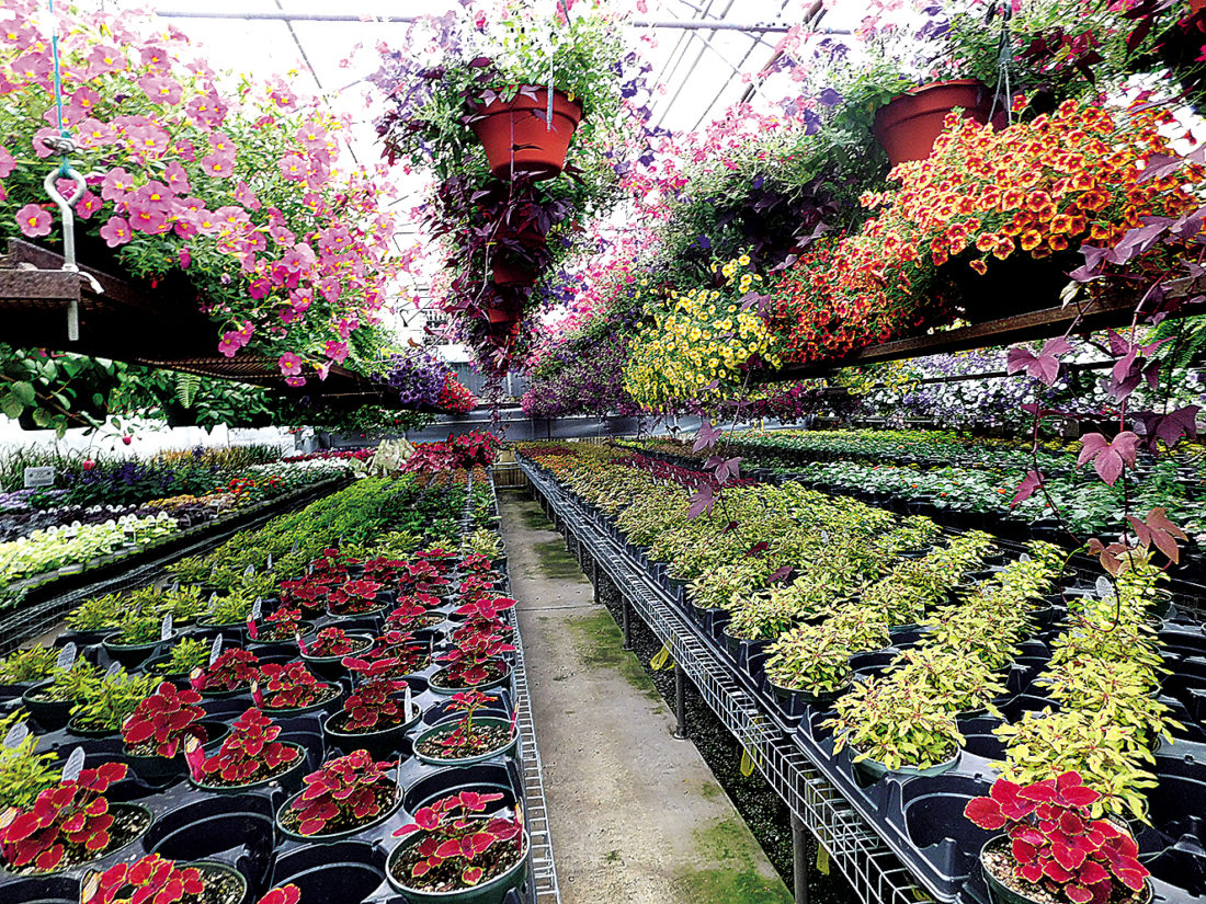 The Inter-Mountain photo by Bayli Helmick Mary's Greenhouse on Ward Avenue in Elkins has more than 300 different plants available this season.