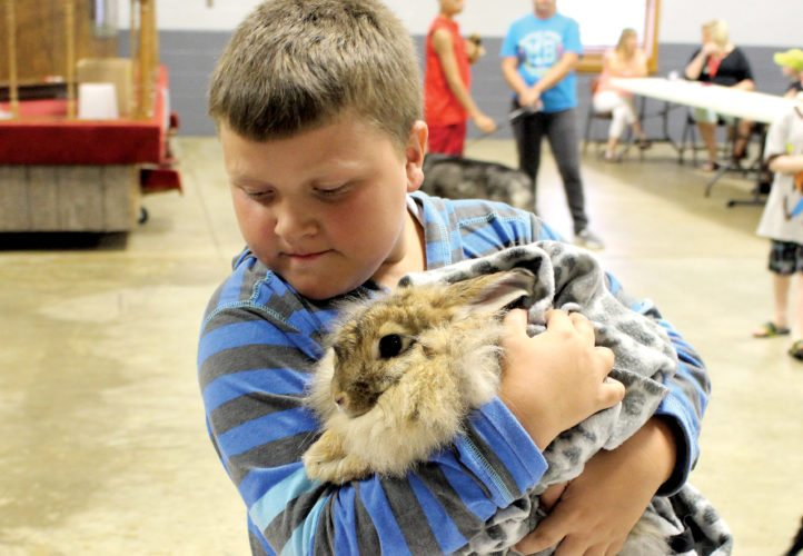 The Inter-Mountain photos by Brooke Binns Jacob Isner and his rabbit Lulu present themselves to the judges at the Beverly Fireman's Festival pet show in the category for most exotic pet Thursday.