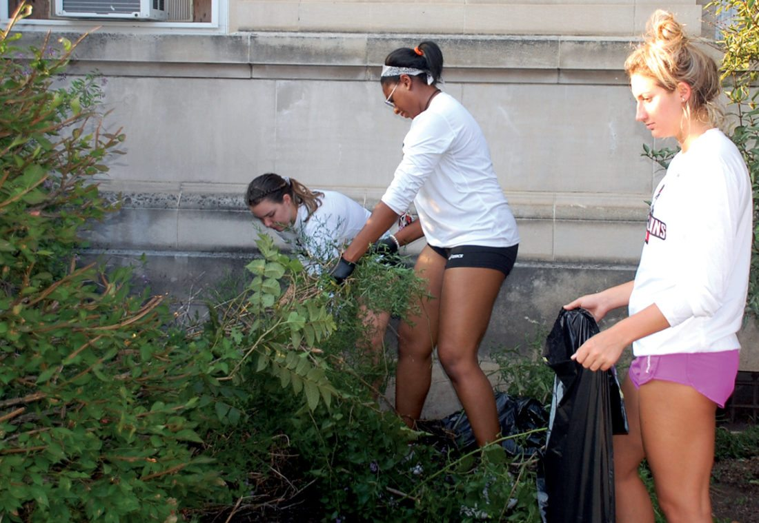 The Inter-Mountain photo by Brad Johnson D&E volleyball players, from left, Karlie Richardson, Charisse Mitchell and Alexa Smarra work on pulling weeds around Elkins City Hall Monday evening.