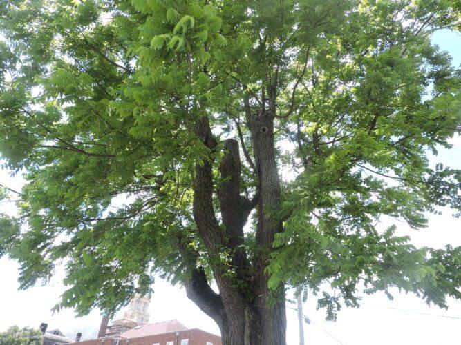 tree climbing1