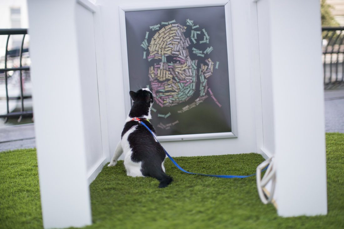 """Bug, a domestic short hair cat, inspects Noah Scalin's """"The Hand That Feeds"""" at Dogumenta (I) NYC, Friday, Aug. 11, 2017, in New York. The art show, featuring 10 sculptures and installations created specifically for dogs, will be on display at Brookfield Place in Lower Manhattan from Aug. 11 through 13."""