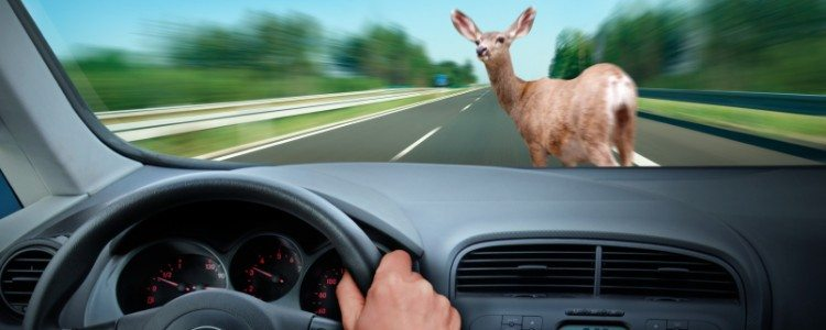 CONTRIBUTED ARTWORK October, November and December are the peak months for motor vehicle crashes with deer. Just this past week, Marshall County sheriff's deputies responded to four crashes with deer within a 60-minute time period.