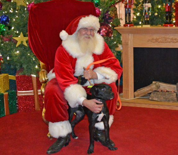 dog and santa web