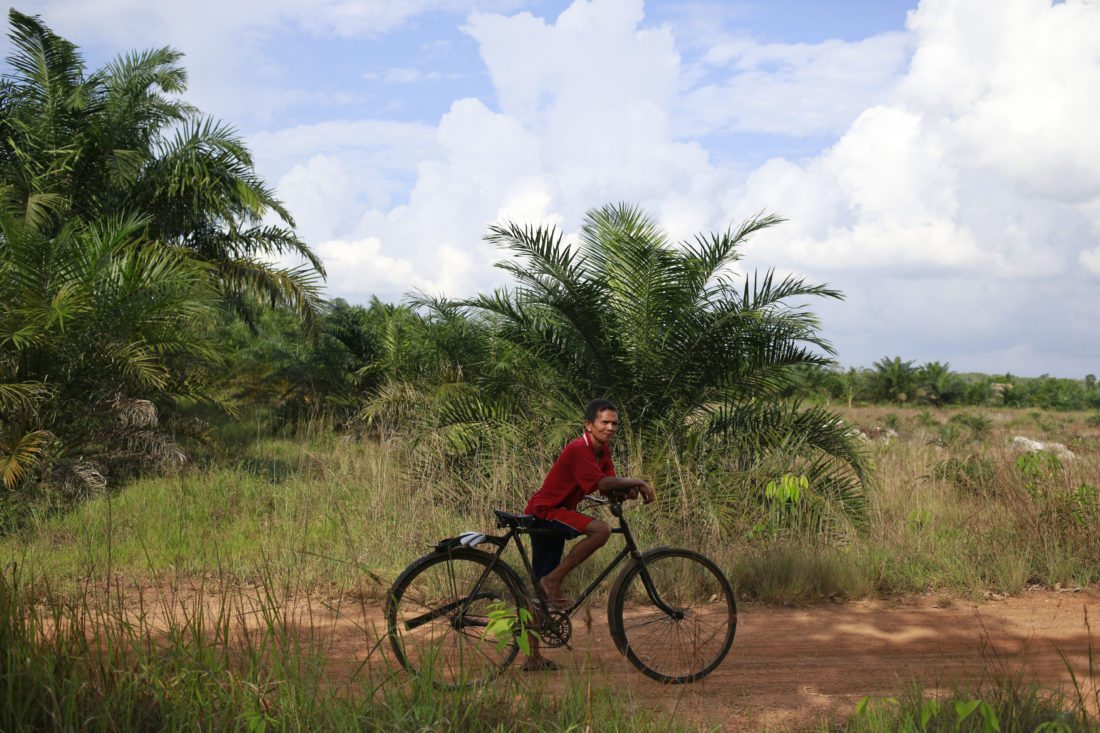 In this June 12, 2017 photo, a villager stands with his bicycle on land they fear will be affected by Asia Pulp & Paper expansion in West Bangka, Indonesia. The pulp and paper company part of the Indonesian conglomerate Sinarmas denies it controls a little-known plantation company it wants as a supplier but an Associated Press investigation reveals the paper giant has had close ties to the company, as it does with more than two dozen other suppliers it characterizes as independent. (AP Photo/Dita Alangkara)