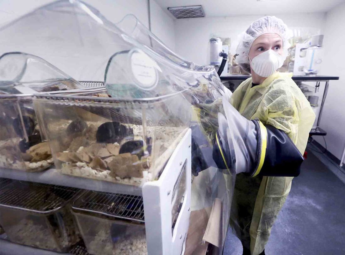 In this Feb. 28, 2017, photo, UW-Madison grad student Julia Kreznar tends mice housed as part of a microbiome study in the university's Microbial Sciences Building in Madison, Wis. (John Hart/Wisconsin State Journal via AP)