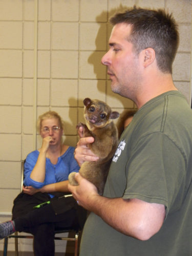 Todd Boerner, educational specialist at the Akron Zoo, shows a kinkajou from the Brazilian rain forest to children Monday at the Girard Free Library. He also showed an Eastern box turtle and boa from Madagascar as part of a nature program. A kinkajou is a member of the raccoon family. Tribune Chronicle / Bob Coupland