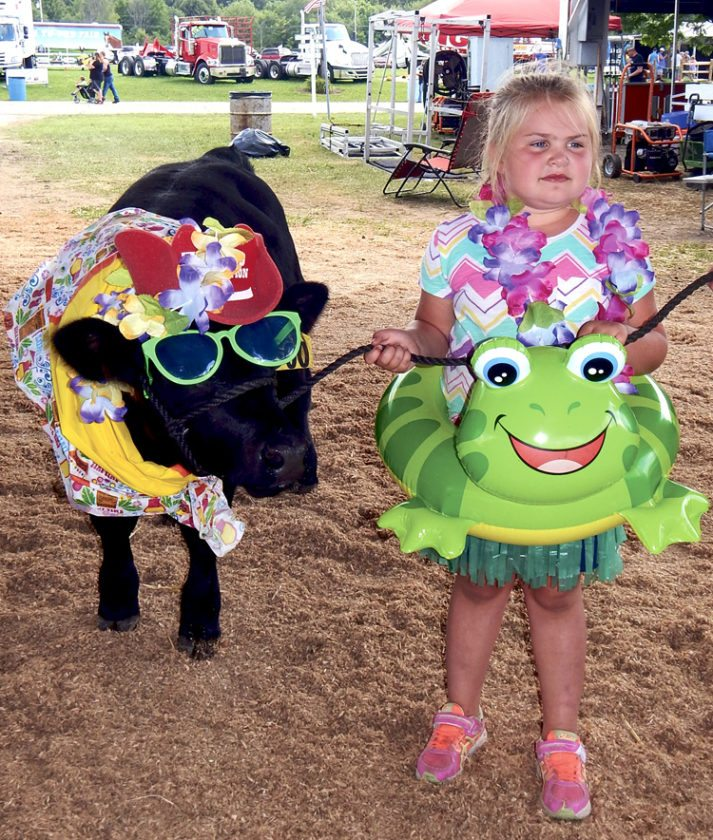 Allie Boyd, 6, of Leetonia, leads her cow, Denali, into the arena Sunday for the Dress a Cow contest at the Trumbull County fairgrounds. The two were dressed for the beach for the event. Local children and adults could dress their cows for the competition. Another cow was dressed as a Tootsie Roll.