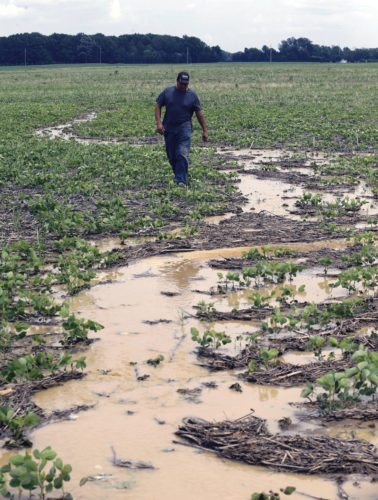 AP Doug Phenicie, who farms about 1,800 acres in northern Ohio, walks across a flooded soybean field in New Washington. The company that developed the Dakota Access oil pipeline is entangled in another fight, this time in Ohio where work on its multi-state natural gas pipeline has wrecked wetlands, flooded farm fields and flattened a 170-year-old farmhouse.