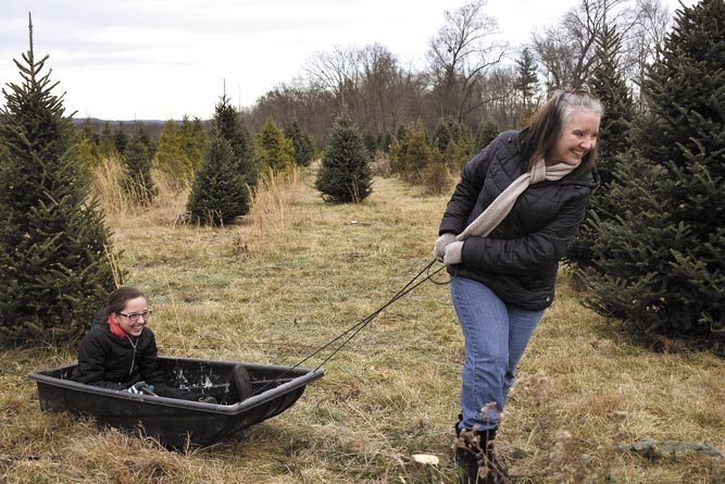 Heather Testani on Saturday pulls daughter Gianna Testani, 11, through the extensive, 100-acre Storeyland Christmas Tree Farm in Burghill as they search for the perfect Christmas tree with husband Rick and son Dominic. Their second year hunting for trees at the farm is turning into a tradition for the family who said it gets them in the holiday spirit.  Tribune Chronicle / Renee Fox