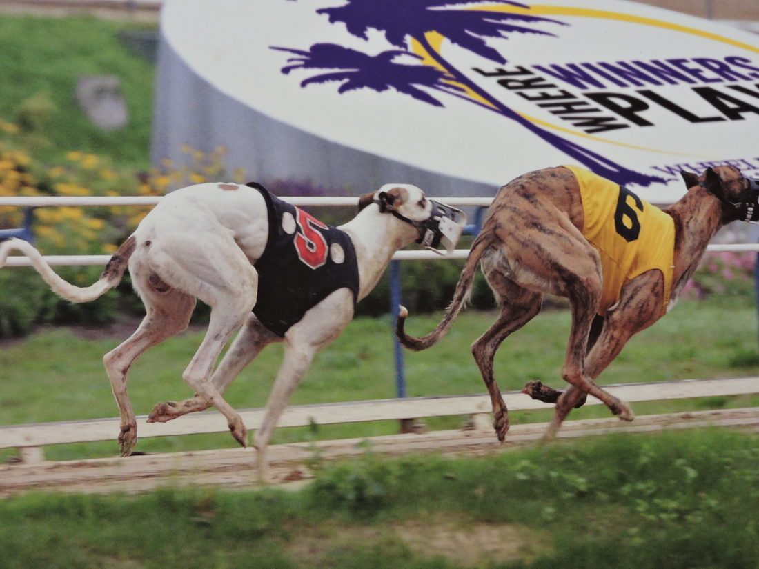 FUTURE IN QUESTION — The future of greyhound racing at Wheeling Island Hotel-Casino-Racetrack is in jeopardy, as West Virginia legislators are looking to slash the approximately $15 million annually paid to breeders via the Greyhound Breeding Development Fund. -- Contributed