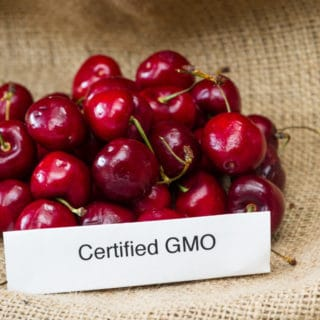 The Anti-GMO Movement… Holy Crusade or Modern Day Witch Hunt?