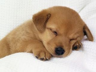 Cute-dog2