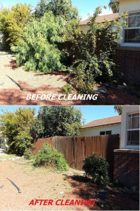 Tree Cutting & Stump Removal Service