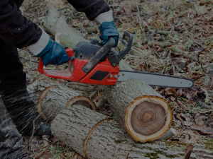 Tree Removal, Tree Pruning, Tree Trimming, Dangerous Removal, Preventative Pruning, Stump Grinding