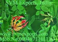 Graviola Superba Seeds Exporters From SVM Exports