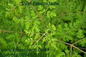 SVM EXPORTS INDIA Moringa Tea(Tea Cut Leaf)