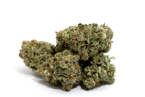 Marijuana Supply. Top quality Hybrid, Sativa and Indica strains - Marijuana seeds for sale