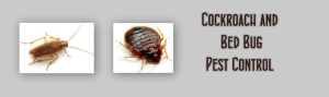 Bed Bug Pest Control Residential Services
