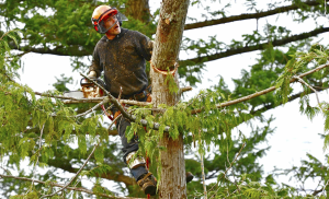 Newman Tree Services