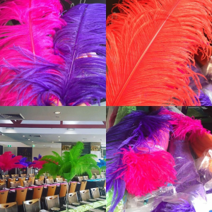 Available Ostrich Feathers for Sale
