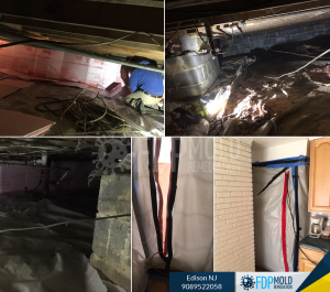 FDP Mold structural damage Crawl spaces