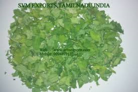 High Grade Moringa Dry Leaves Suppliers From SVM Exports