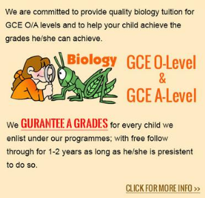 Biology Tuition Singapore