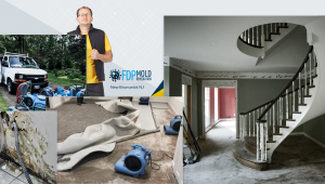 Cover FDP Mold Remediation