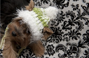 Knit Hat for Dogs- Lime