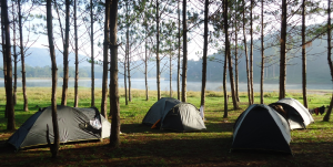 Jungle Fever - Trekking and Camping