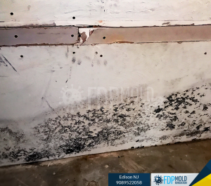 FDP Mold Inspection Testing Remediation